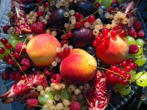 Owocowe bogactwo